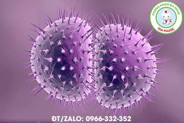 hình ảnh của vi khuẩn lậu